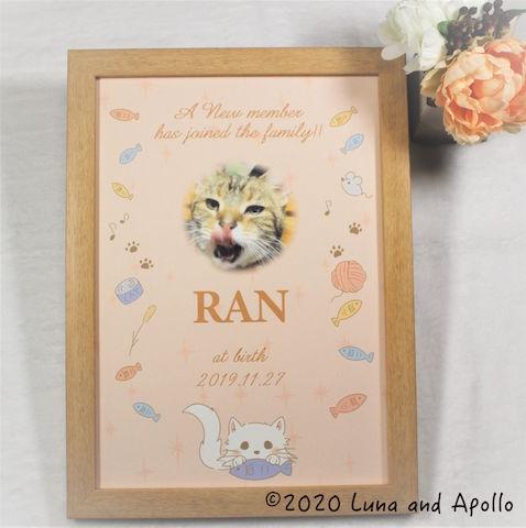 命名書 バースデーポスター 子猫にも使えます♪ ねこちゃんデザイン